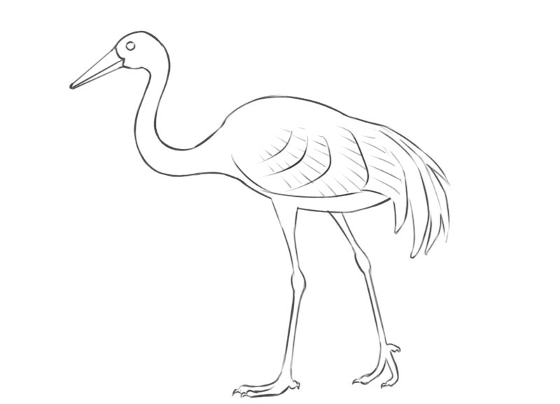crane bird coloring pages