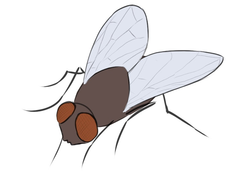 fly coloring page