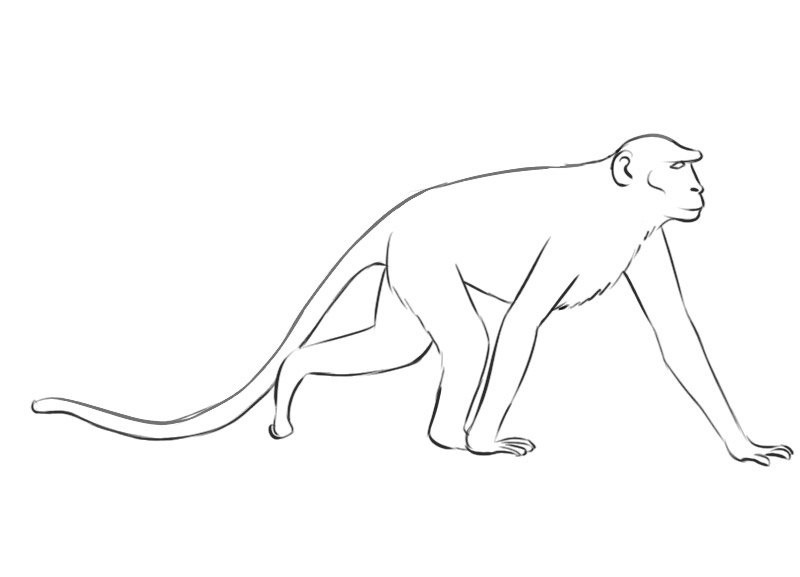 Monkey Coloring Book Pages - Coloring Home | 577x800