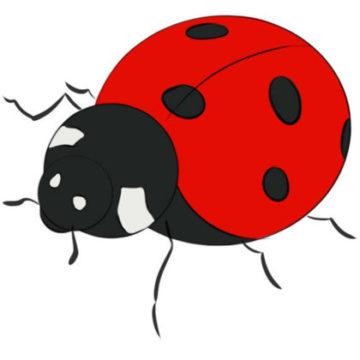 Ladybug Coloring Page printable