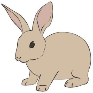 Rabbit coloring page printable