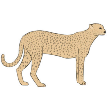 cheetah coloring page printable