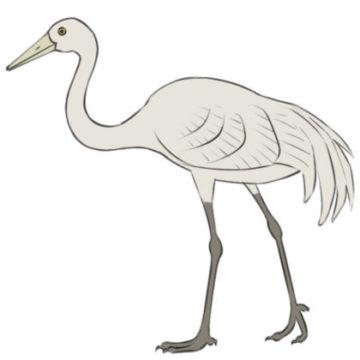 crane bird coloring page printable