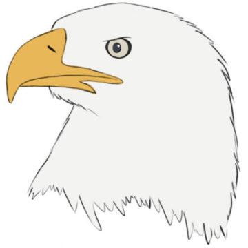eagle head coloring page printable