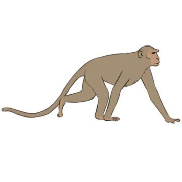 monkey coloring page printable