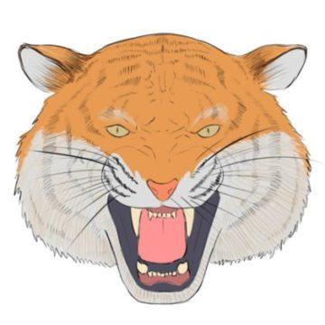 tiger head coloring page printable
