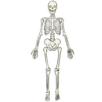 skeleton coloring page printable